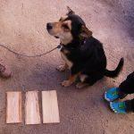 てるお 犬 テルオ