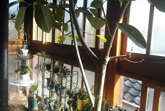 温室 グリーンハウス